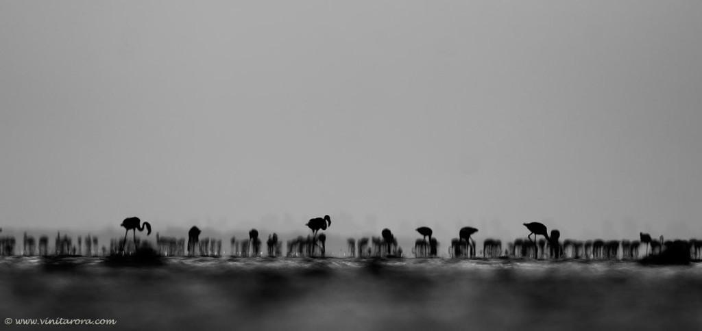© Vinit Arora